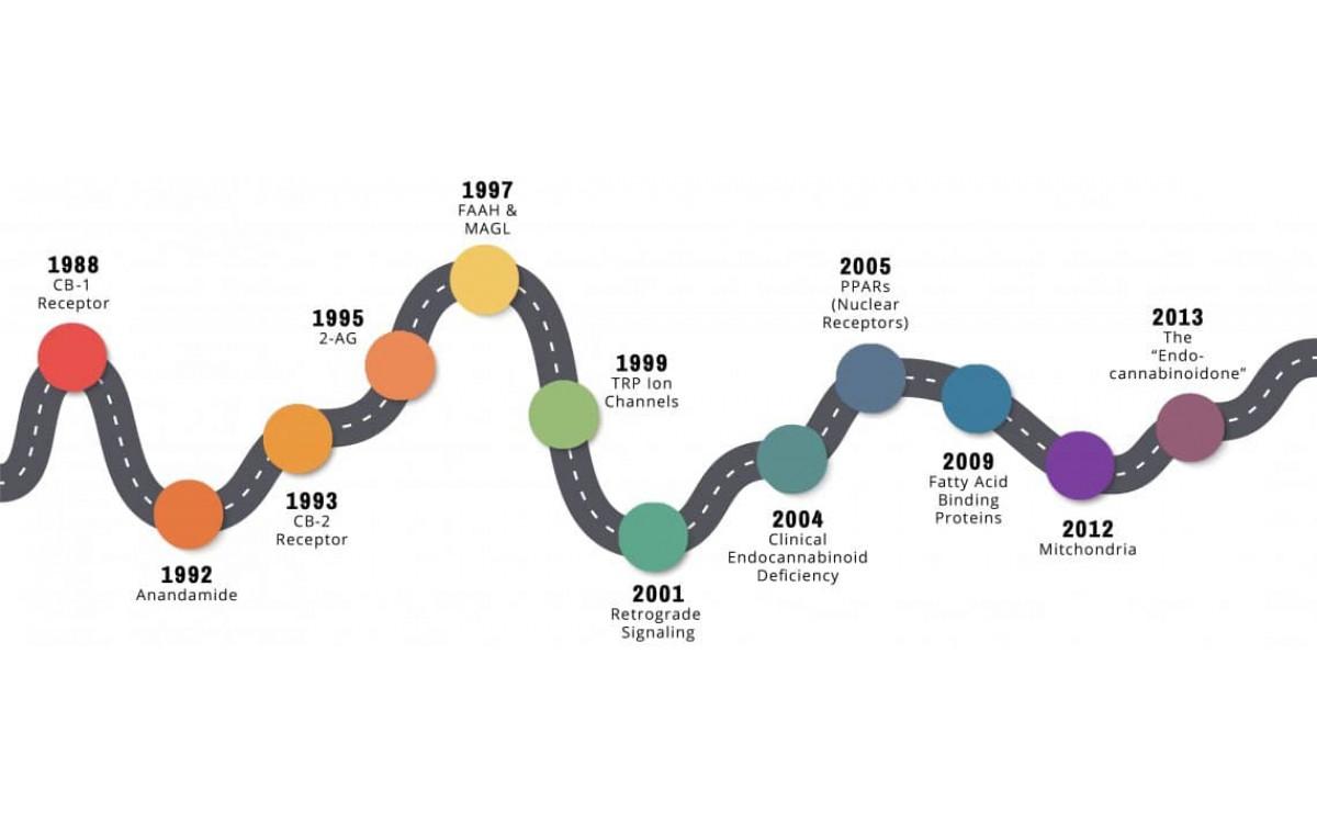 Хронология открытия эндоканнабиноидов
