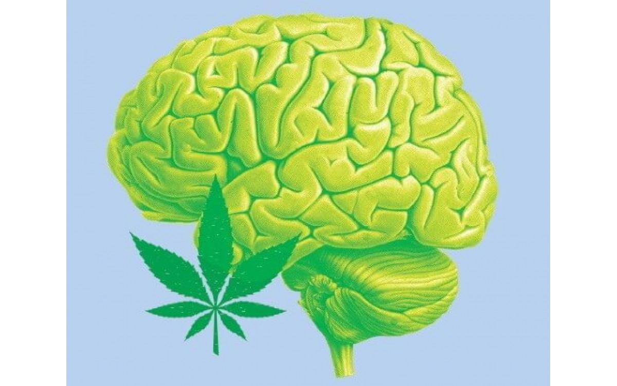 Как CBD влияет на мозг?