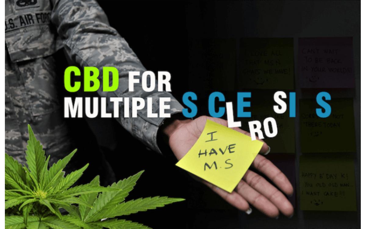 CBD масло оказывают сильное противовоспалительное действие при рассеянном склерозе